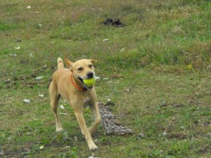 Tennis ball fetcher